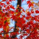2014_autumn_1