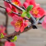 2014_spring_2